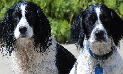 Can you believe someone would abandon these pups?
