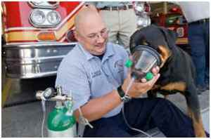 Firefighters can use a dog oxygen mask to save lives